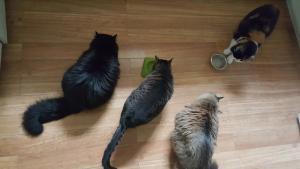 The Franks' cat family